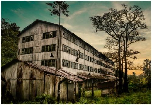 11 points-Tea Factory-Ajith Hidakaraldeniya