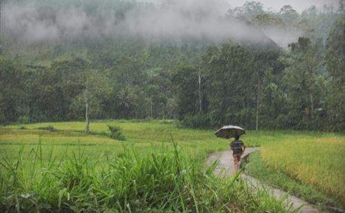 12 points-Monsoon-Ajitha Edirimanna