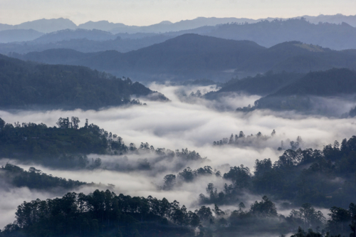 12 points-Misty Valley-Pradeep Mallikararchchi