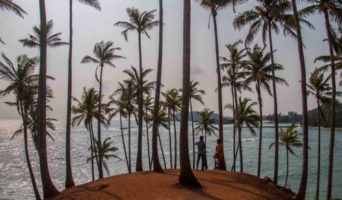 12 points-Coconut Hill-Sumudu Soyza