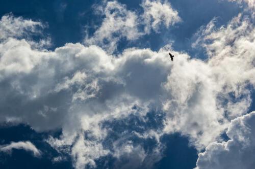 8 points-Sky is My Home-Pradeep Mallikarachchi