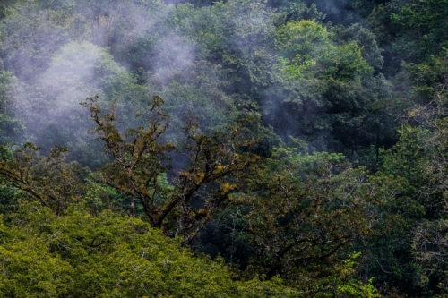 8 points-Shades of nature-Ashan Fernando