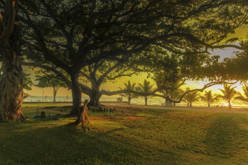 8 points-GOLDEN MORNING-Arulramalingam