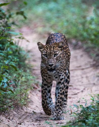 8 points- A Walk To Remember-Sumudu Soyza