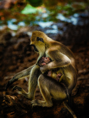 8 points-Mother's Love-Sumudu Soyza