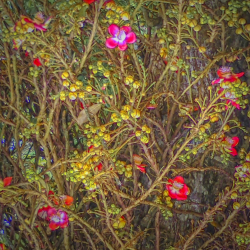9 points-FLORAL MOTIF IN NATURE-Arulramalingam