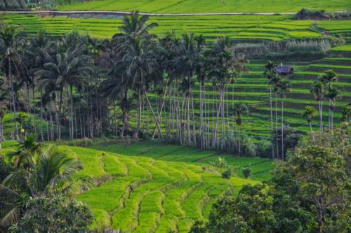 9 points-Terraces-Nilan Herath