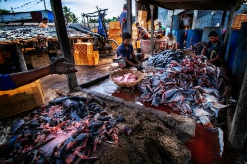 9 points-Fish and life-Anuradha Bandara