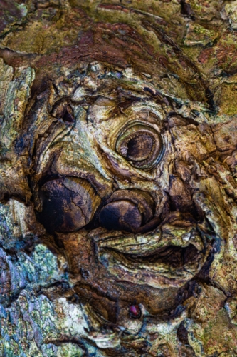 9 points-Natures own art on a tree trunk-Mervyn Perera